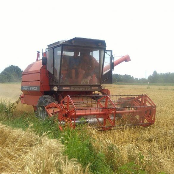 Pšenicom je u Hrvatskoj zasijano 138 000 hektara